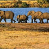 Answers, Questions and Rampaging Elephants